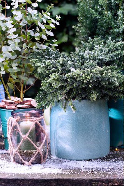 blauwe_coniferen_feat_tuinplantvandemaand3
