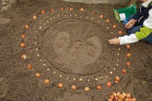 Bloembollen planten